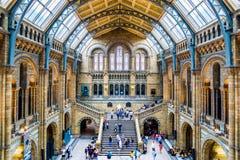 自然历史博物馆的主要霍尔在伦敦 免版税库存图片