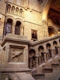 自然历史博物馆-伦敦-英国 免版税库存图片