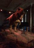 自然历史博物馆-恐龙 库存图片