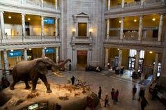 自然历史国家博物馆  库存照片