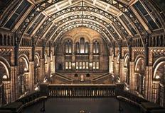 自然历史记录内部伦敦的博物馆 库存图片