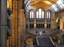 自然历史记录的博物馆 库存图片