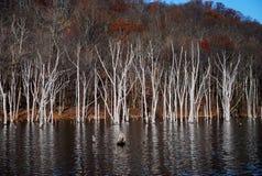 自然反射monksville水库新泽西 库存照片