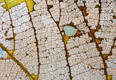 自然可变性秋天菩提树叶子纹理最基本的样式有机老化过程,宏观看法摄影 图库摄影
