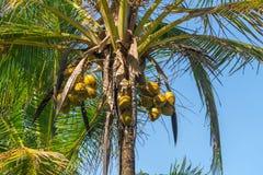 自然可可椰子树抽象射击  库存图片