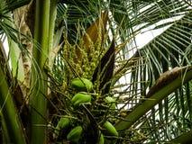 自然可可椰子花生活方式摄影 库存图片