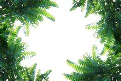 自然叶子框架 库存图片