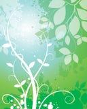 自然叶子背景 库存照片