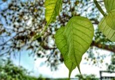 自然叶子 库存图片