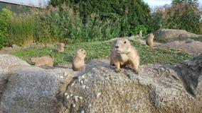 自然和啮齿目动物 免版税库存照片