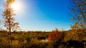 自然和太阳摄影在城市后在秋天 免版税库存图片