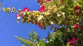 自然和它的秀丽 免版税库存图片
