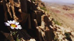 自然和山摩洛哥 库存照片