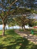 自然和树 免版税库存照片