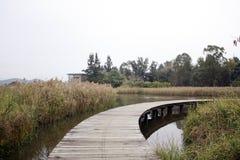 自然和桥梁 免版税库存照片
