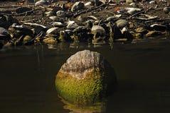 自然和河的细节 库存图片