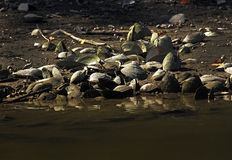 自然和河的细节 免版税库存图片