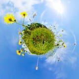 自然和环境概念 360对一个开花的草甸的作用 免版税库存照片