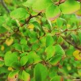 自然和绿色叶子 免版税库存照片