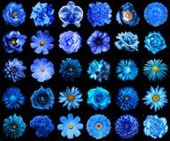 自然和超现实的蓝色拼贴画开花30在1 图库摄影