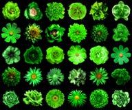 自然和超现实的绿色拼贴画开花30在1 库存图片
