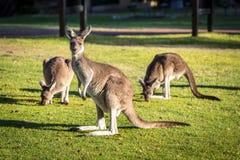 自然和野生生物 免版税库存照片