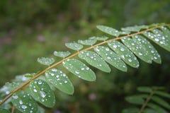 自然和雨珠在夏天 库存照片
