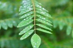 自然和雨珠在夏天 库存图片
