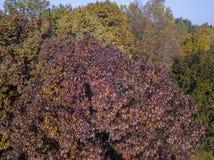 自然和风景:公园、秋天叶子、叶茂盛树和草甸,绿地的鸟瞰图 免版税库存照片