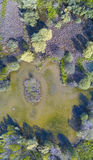 自然和风景:森林和湖的鸟瞰图 库存照片
