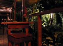 自然哥斯达黎加的植物群和动物区系 免版税库存照片