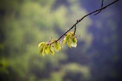 自然喀尔巴汗在雨中 免版税库存照片