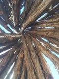 自然圆锥形帐蓬木艺术  库存照片