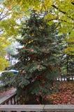 自然圣诞树 图库摄影