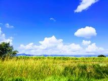 自然在哥伦比亚 库存图片