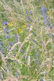 自然在夏天。杂色的草 免版税库存图片