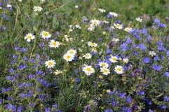 自然在夏天。杂色的草 免版税库存照片