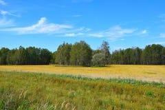 自然在早期的秋天在西伯利亚 免版税库存照片