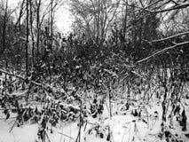 自然在森林里在一个黑白图象的冬天 图库摄影