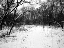 自然在森林里在一个黑白图象的冬天 免版税库存照片