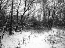 自然在森林里在一个黑白图象的冬天 免版税库存图片