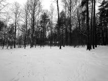 自然在森林里在一个黑白图象的冬天 库存图片