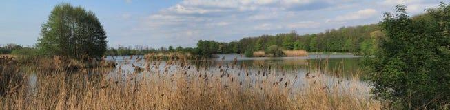 自然在池塘 免版税库存图片