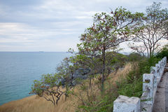 自然在海岛上的海视图 免版税库存图片