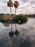自然在湖 图库摄影