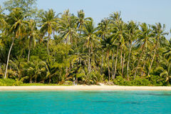 自然在热带 免版税库存照片