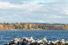 自然在秋天期间在温哥华加拿大2016年10月 免版税图库摄影