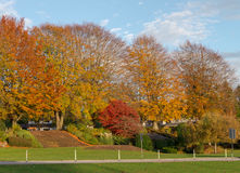 自然在秋天期间在温哥华加拿大2016年10月 免版税库存图片