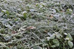 自然在秋天 包括的霜草灰白叶子薄菏 免版税库存照片