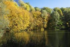 自然在秋天 免版税库存照片